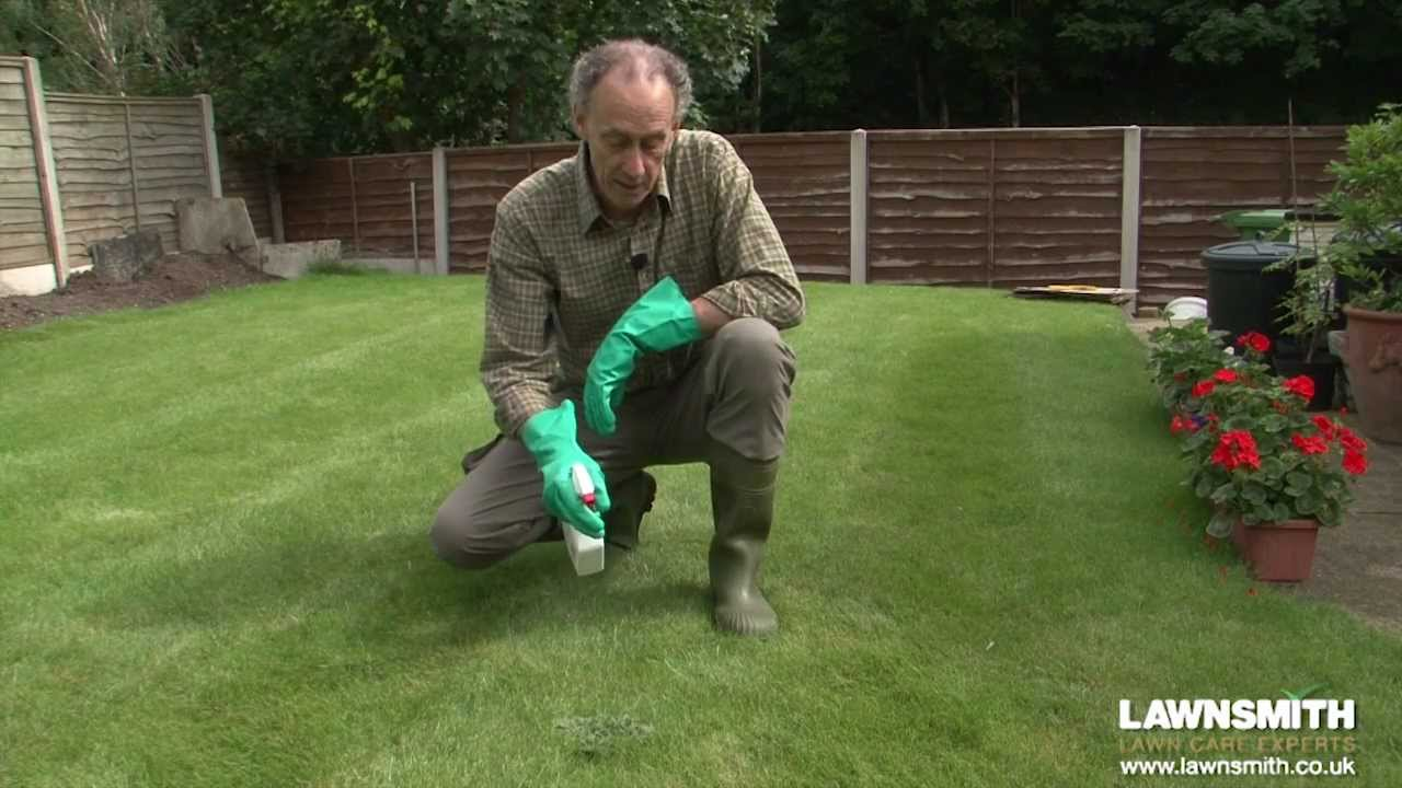 How To Spot Spray Weeds In The Lawn