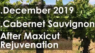 Cabernet Sauvignon | Before and After MAXICUT