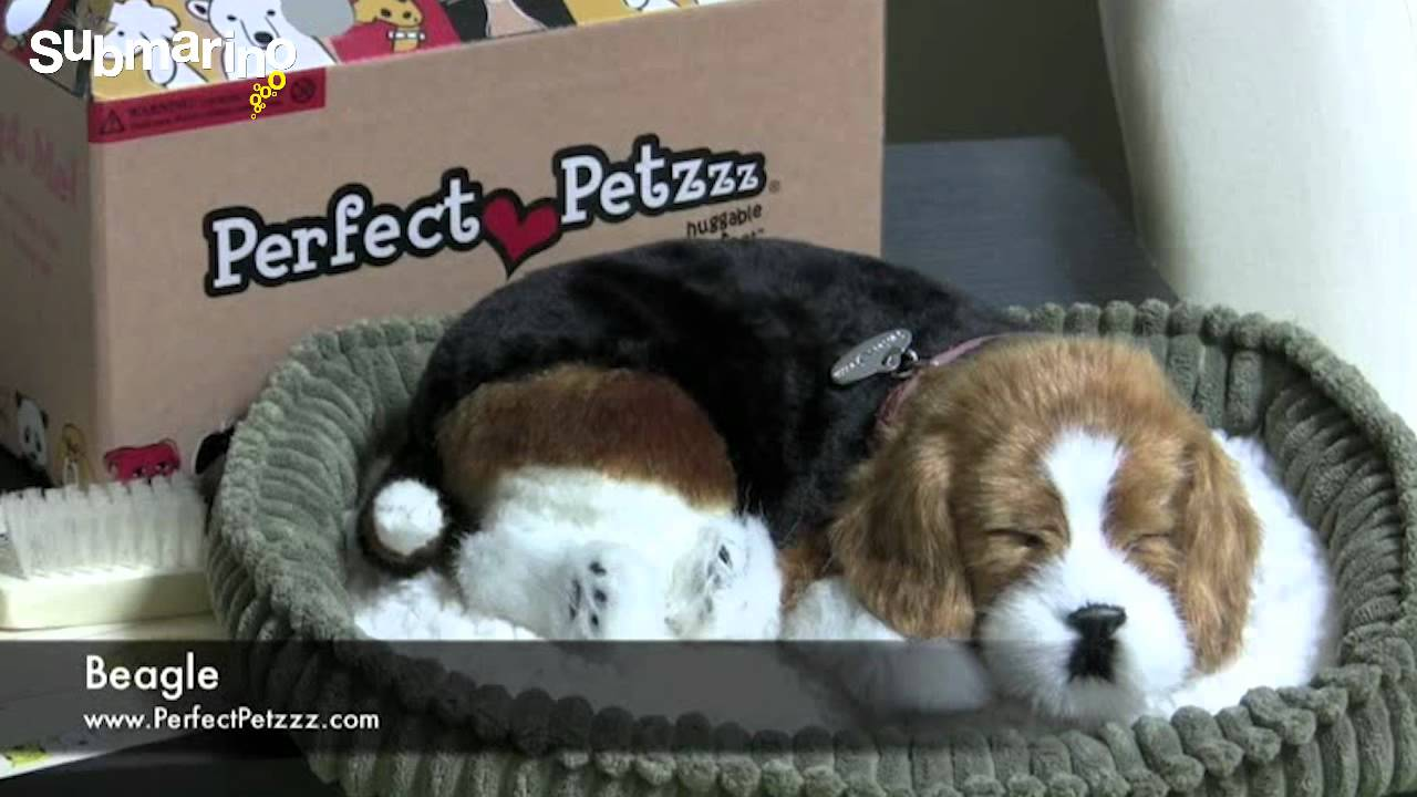 perfect petzzz how to turn on