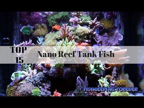 Top 15 Nano Reef Tank Fish