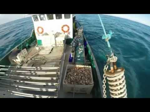Northern Star - Scalloping  In Australia