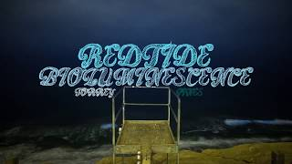 サンディエゴの海岸が青く染まる時。赤潮の発生でプランクトンが増殖。波打ち際は幻想的な青に包まれる(アメリカ)