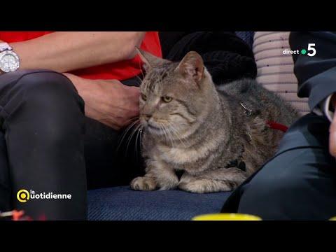 Le chat : un chasseur n !