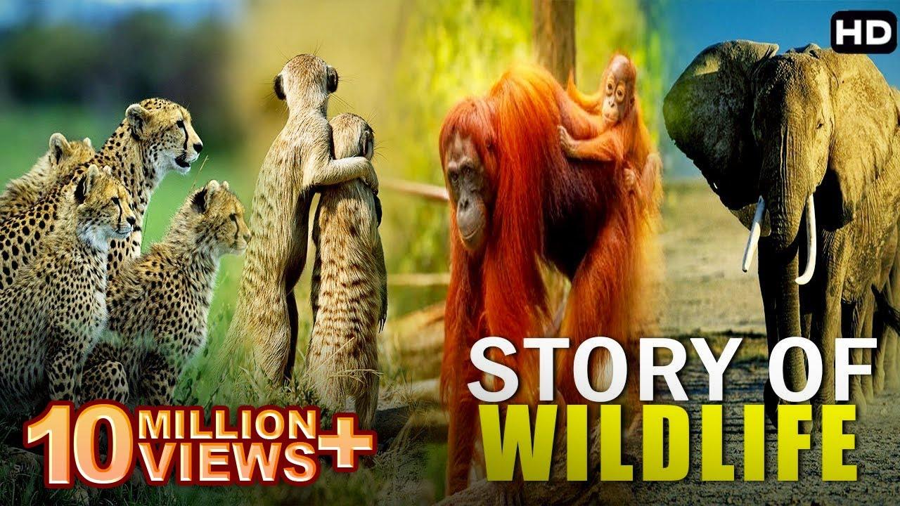 इंसनोकीही तरह होती हे इनकी जिंदगी   Real Story Of Wildlife