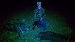 Wild Boar Hunting - A Pitbull And 2 Pointers Dogs Attacking A Boar