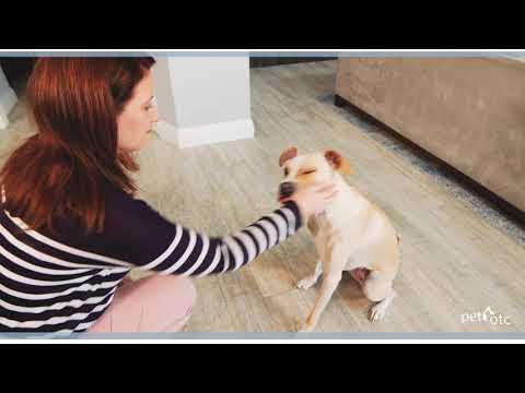 Difixin Pet Medication Promo Video