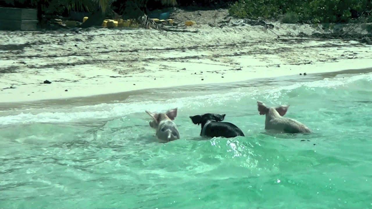 Sandals Emerald Bay In Great Exumas Bahamas All