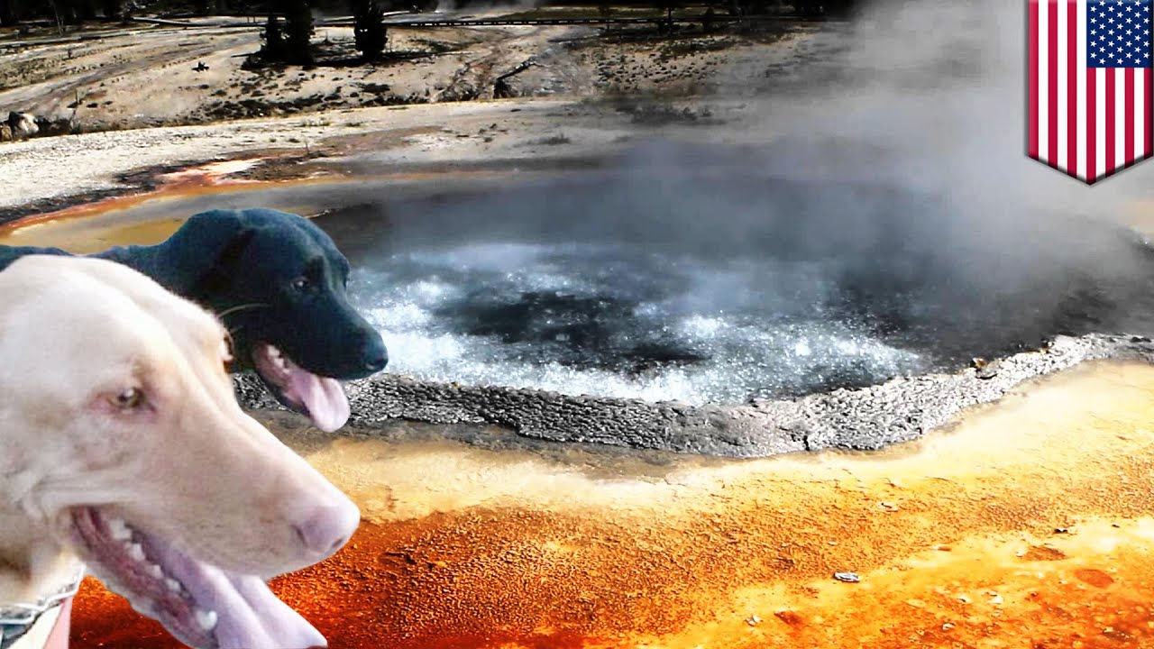 Hot Springs Save Dog