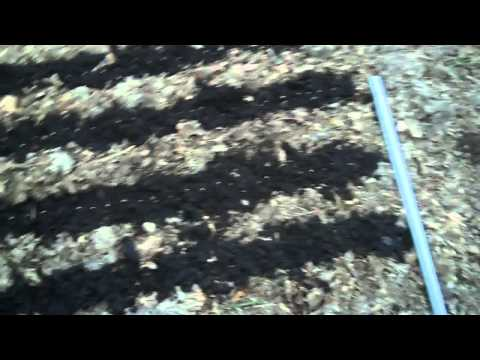 Planting Chinese Red Meat