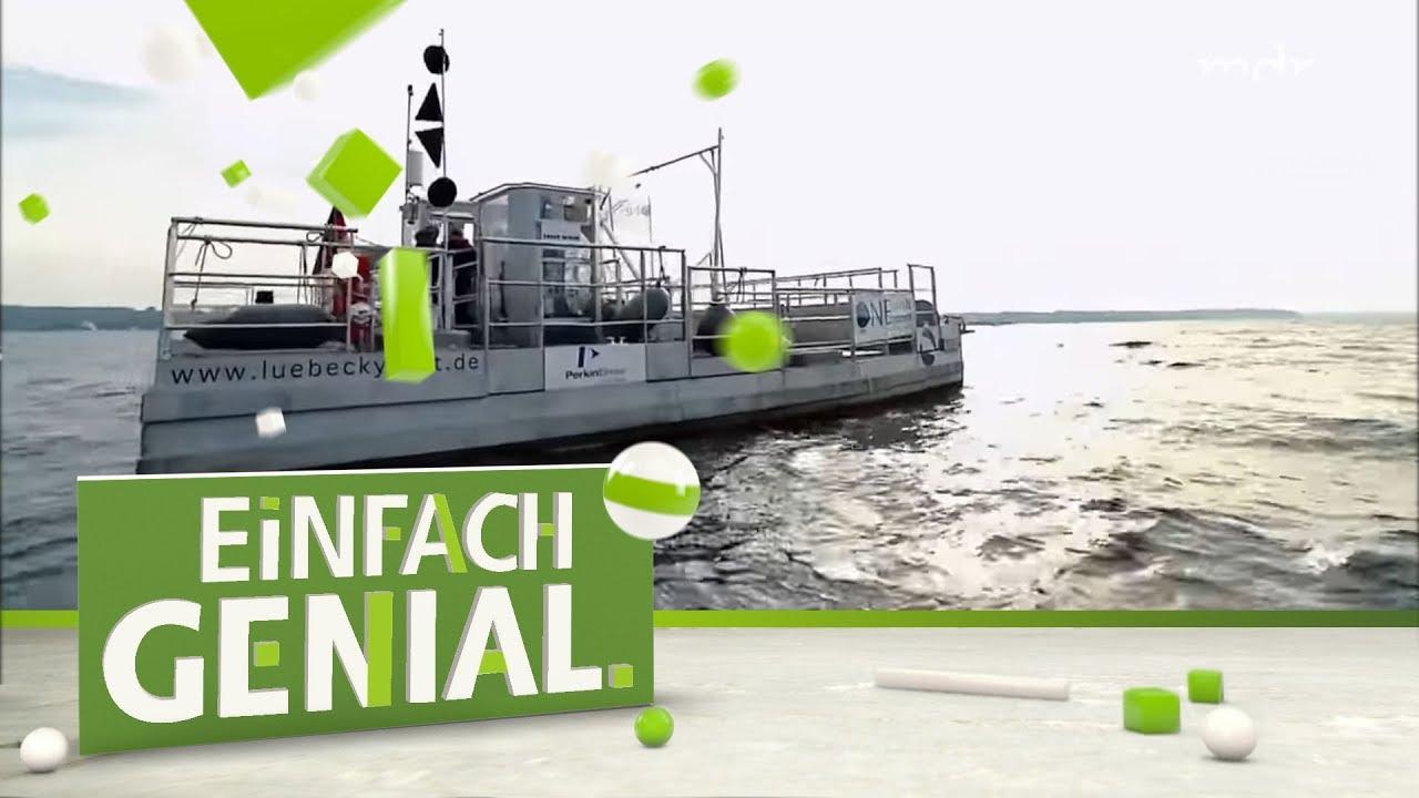 Umweltschutz Seekuh Sammelt Müll Aus Dem Meer Einfach Genial