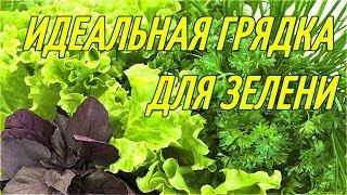 ИДЕАЛЬНАЯ ГРЯДКА ДЛЯ ЗЕЛЕНИ/укроп,петрушка,руккола,базилик,кинза,майоран,крест салат,тархун,салат.