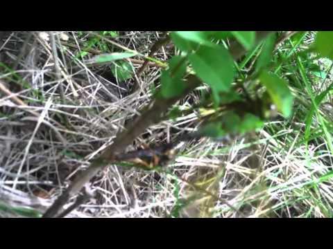 Hornet Vs Praying Mantis Dragonfly vs Bee | Doo...
