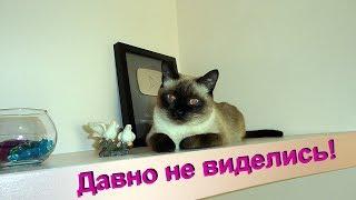 Видео для любителей  котов.