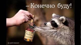 Веселые фотки животных.