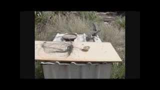 Как сделать ловушку для птиц