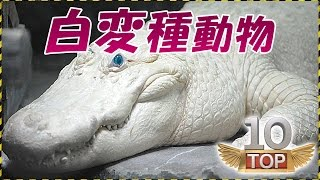 【アルビノ】10の白変種動物 アルビノ 検索動画 5