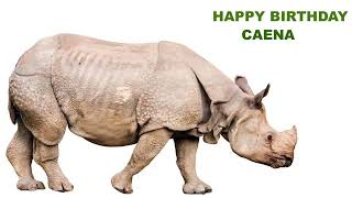 Caena   Animals & Animales - Happy Birthday