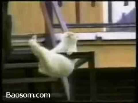video funnies,Funny cat , make you smiles