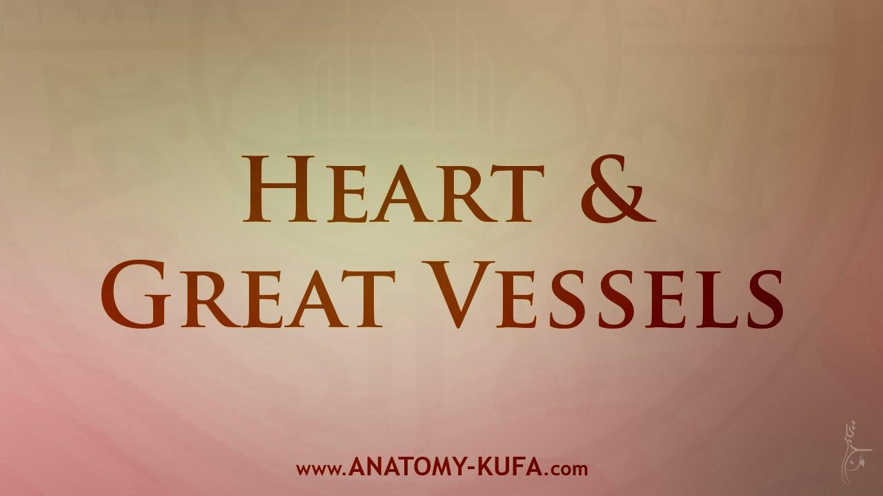 25. Heart & Great Vessels | Anatomy Kufa - YouTube