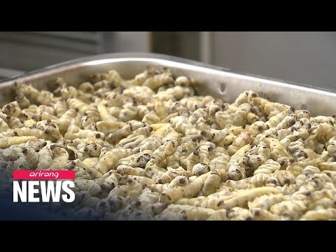 Freeze-dried silkworms help prevent, treat Alzheimer's disease