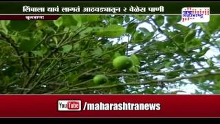 Sheti Mitra: Lemon tree farming thrice in year