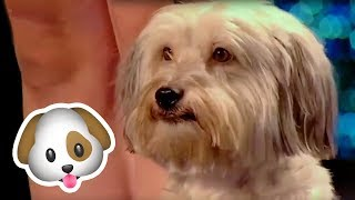 Incredible DOG AUDITIONS From Around The World on Got Talent!