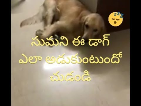 Anchor Suma Pet Dog || suma family , anchor suma house in hyderabad