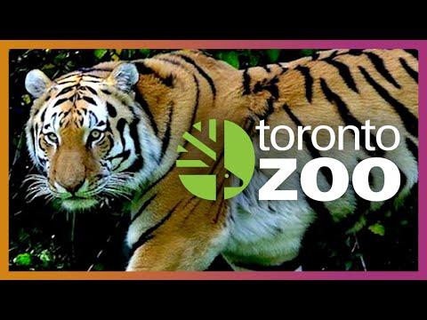 🐯 Planet Zoo Research! | Toronto Zoo Vlog