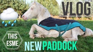 Vlog | New Winter Paddock, Worming and Jumping | This Esme