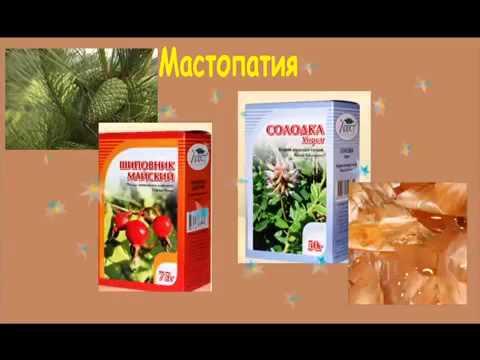 Мастопатия. лечение мастопатии народными средствами и методами