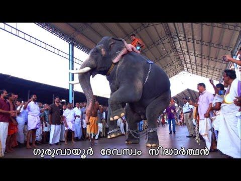 Kerala Elephant Latest Video Guruvayoor