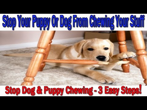 ►►how-to-stop-your-puppy-or-dog-from-chewing-♥-3-easy-steps!-♥-stop-dog-chewing-:)))