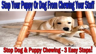 ►►how To Stop Your Puppy Or Dog From Chewing ♥ 3 Easy Steps! ♥ Stop Dog Chewing :)))
