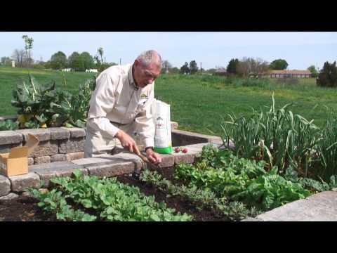 Gardening Guide #3: Gardening with Seeds