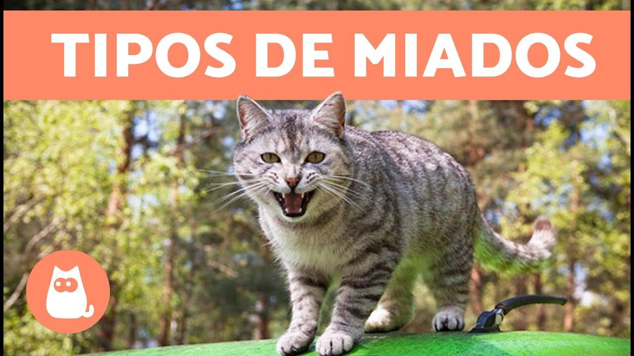 GATOS MIANDO BAIXAR SONS DE