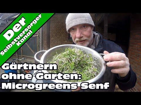 Gärtnern ohne Garten mitten im Winter: Microgreens