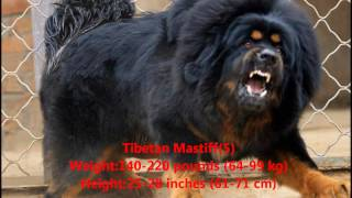 Лучшая десятка пород сторожевых собак в мире