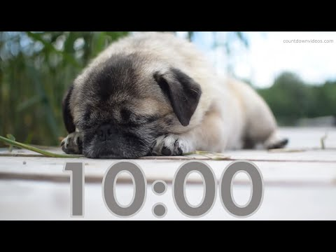 Cute 10 Minute Dog Timer With Music For Study and Homework 🐶 Bark Alarm Sound