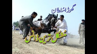 best horse dance in pakistan No.12