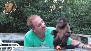 Monkey Plum Crazy!