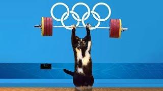Битва фотошопа — кот с поднятыми лапами
