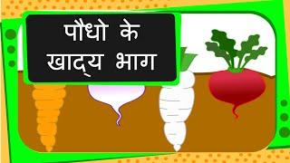 Science - Edible Parts of Plants - Hindi