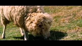 Sheep - Pink Floyd (traducida al español)