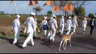 Deer On the way to Pandharpur with Palkhi