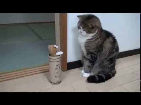 Cat gets surprised