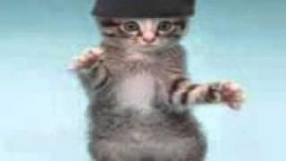 Танцующие коты.3gp