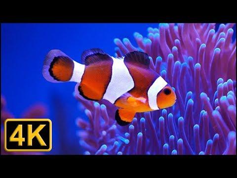 4K - Beautiful ocean clown fish turtle aquarium - 2 hours of Relaxing and sleeping music
