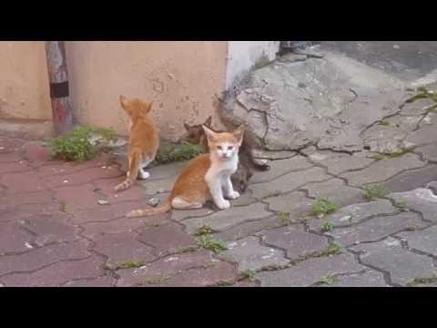 젖을 주던 어미가 사라지자 놀란 새끼 고양이