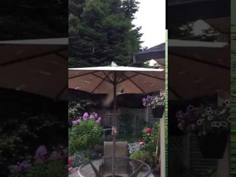 Stu the cat falls off roof  --- cat fails
