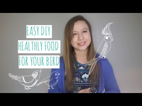 DIY Healthy Bird Food - How to Sprout Seeds for your Bird - Sprouting Seeds